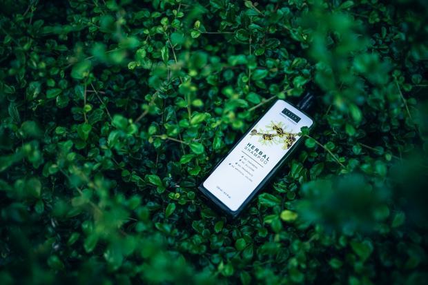 бутылка шампуня на фоне зеленых листьев