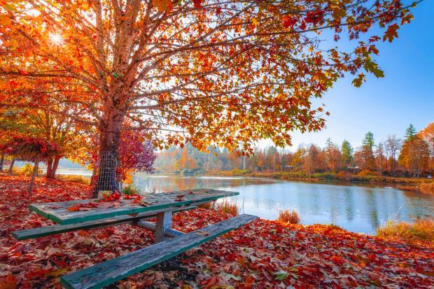 лавка и стол возле водоема в осеннем лесу