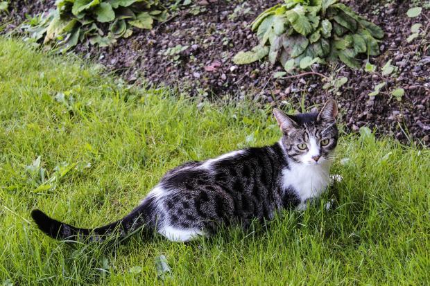 кошка на траве
