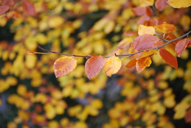 красные и зеленые листья на ветке дерева