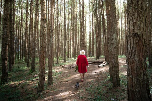женщина в красном пальто гуляет с собакой в лесу
