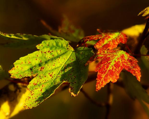 разноцветные листья на дереве