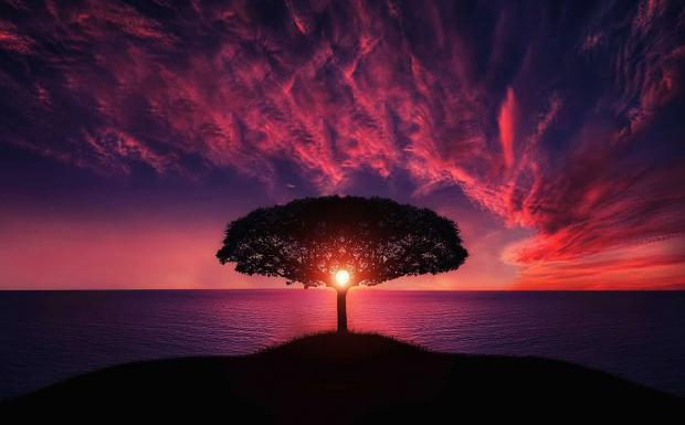 дерево на холме, море, закат