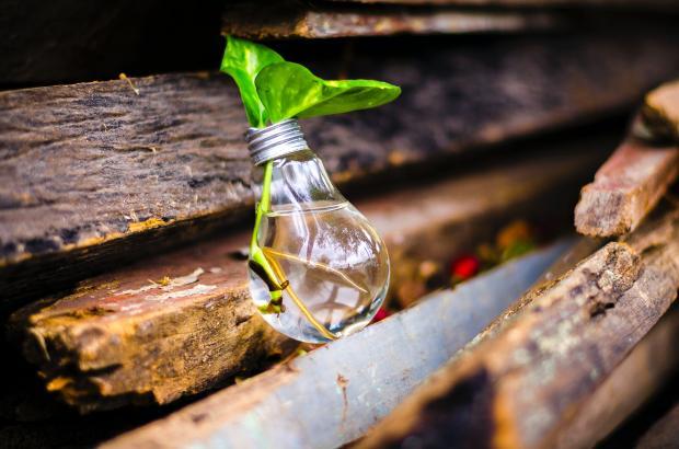 лампочка с ростком на досках