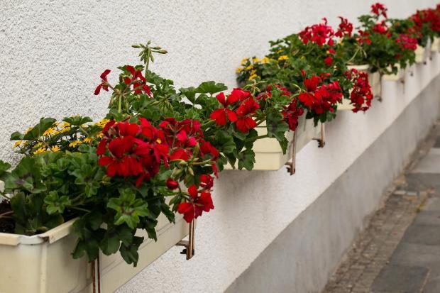 в ящиках цветут комнатные растения
