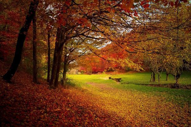 осенняя дорога идет по лесу
