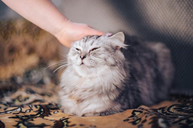 человек гладит кошку по голове