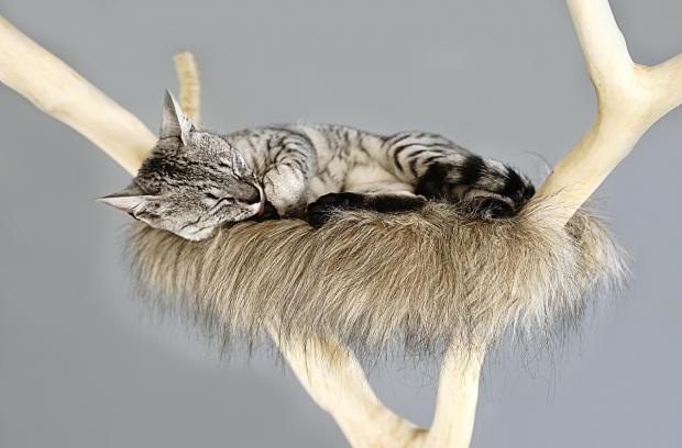 кошка лежит на лежанке в виде ствола дерева