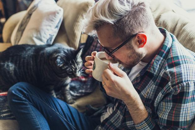 кошка крадется к пьющему чай на диване мужчине