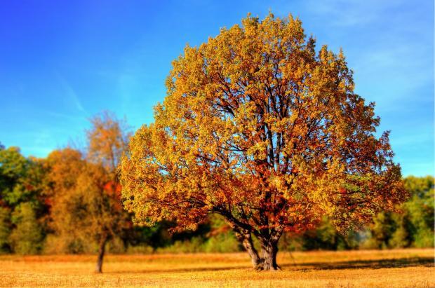 красивое дерево с желтыми листьями