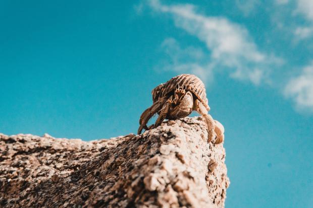 краб на вершине горы