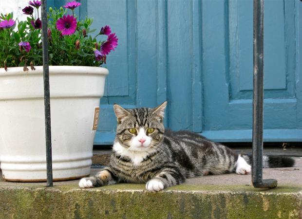 кошка на пороге дома