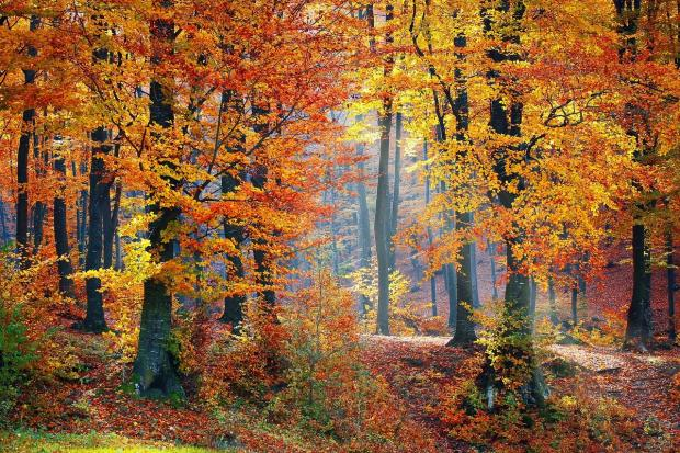 тропинка петляет по осеннему лесу