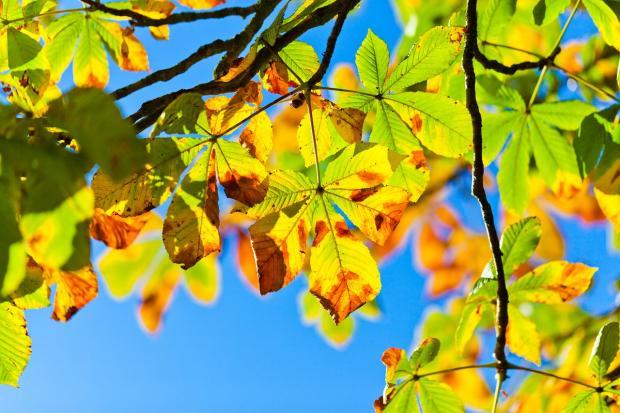 голубое небо просвечивает сквозь осенние листья