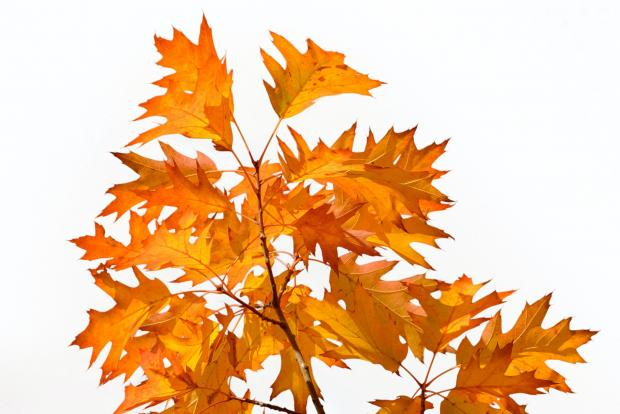 Желтые листья на ветке дерева
