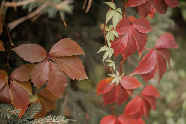 красные и коричневые осенние листья