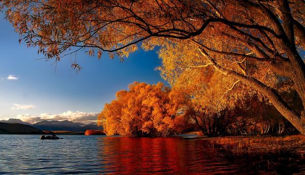 осенние деревья на берегу озера