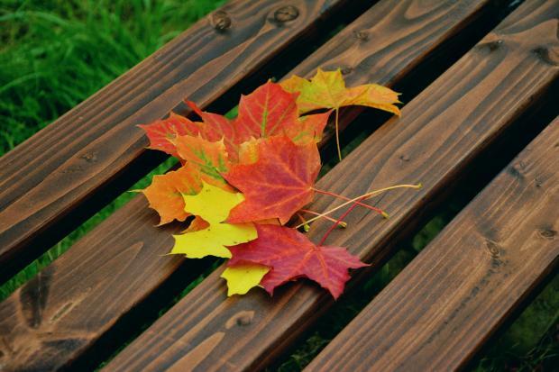 цветные листья на деревянной скамейке