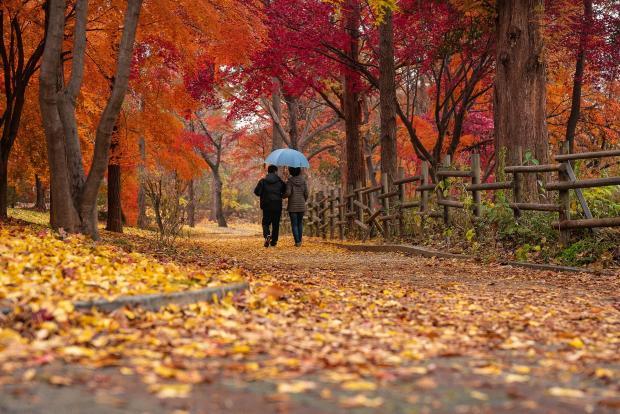 мужчина и женщина прогуливаются по парку