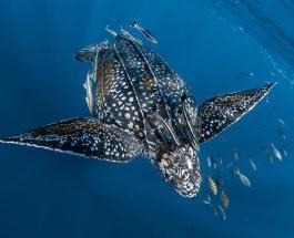 Ocean Photography Award: потрясающие фото финалистов, показавших красоту подводного мира