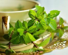 7 причин каждый день пить чай с мятой: польза травяного напитка