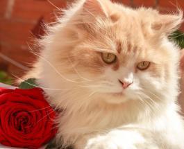 Как по поведению кошки узнать, что в доме присутствует отрицательная энергетика