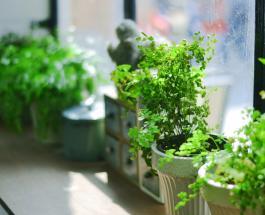 10 токсичных растений, которые опасно выращивать дома