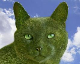 Топиарий в виде кота: художник выразил любовь к покойному питомцу с помощью творчества