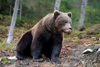 Забавное видео: медведь не смог открыть бак с мусором и украл его целиком