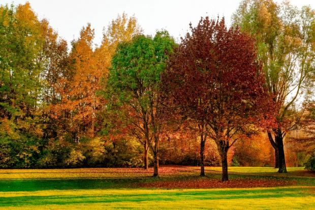 красивый осенний пейзаж с деревьями