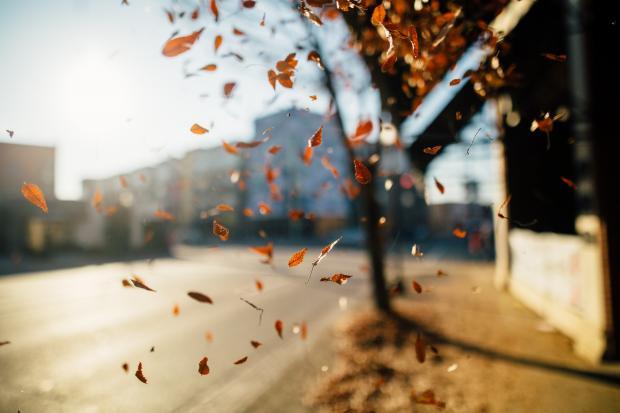 желтые листья падают с дерева